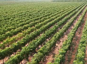 Clube do Vinho Vinícola 1